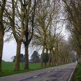 Tree - Belgian Tree-Lined Road