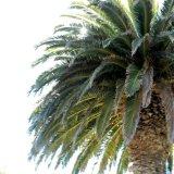 Tree - Underneath the Palm Tree
