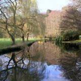 Tree - Willows and the Bridge over the River Wey