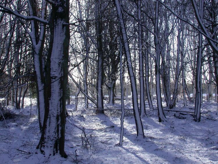 Winter - Snow Forest with a 3D look