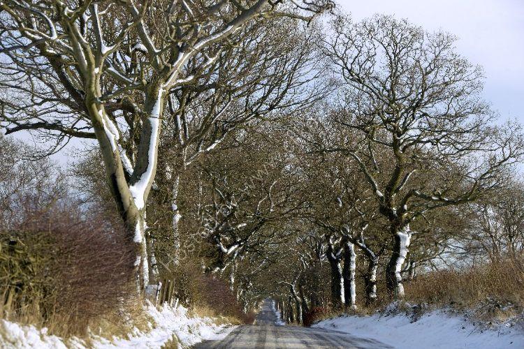 Winter - Winter Avenue