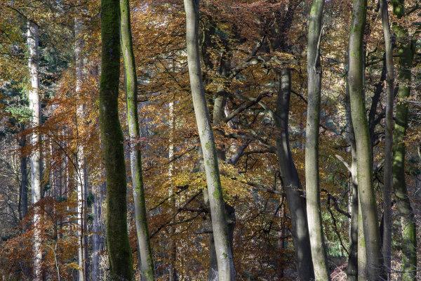 Savernake Forest