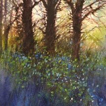 Early Morning Spring Woodland