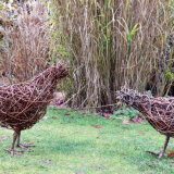 Chickens near tall grass