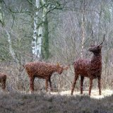 Deer Lindow Common (2)