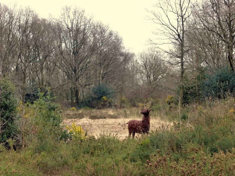 Deer Lindow Common (3)