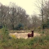 Deer Lindow Common (3)