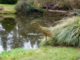 Willow Heron in ornamental garden