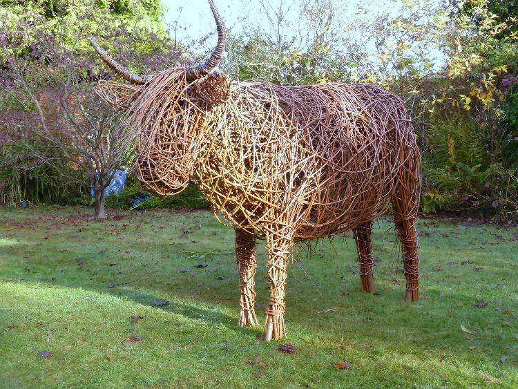 Highland Cow  (3)