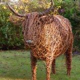 Highland Cow  (4)