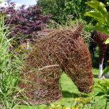 Horse Head (5)