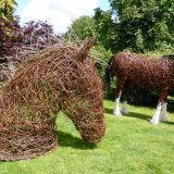 Horse Head (6)
