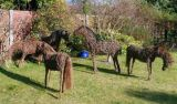 Willow horse sculptures - here's a bit to read