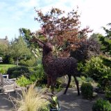 A deer for Winsford (Netty)