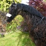Racehorse (6)
