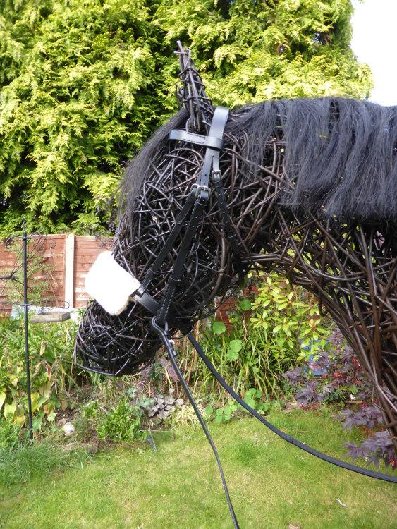 Racehorse (5)