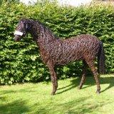 Racehorse (3)