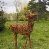 Red deer stag - Hillier Gardens