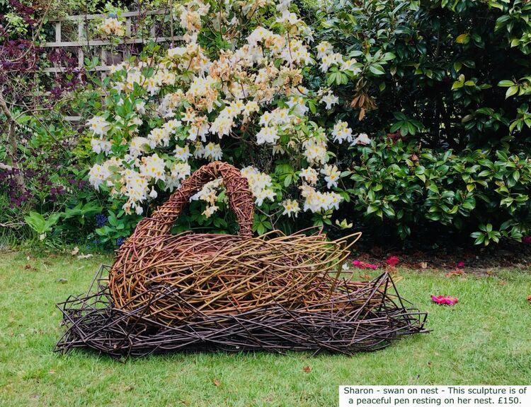 Sharon - swan on Nest