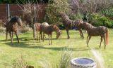 Willow Horses