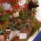 Turner's nursery prize winner at Poynton show
