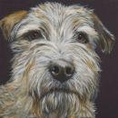 Border Terrier, Bert