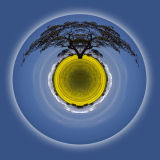 Canola Time Planet