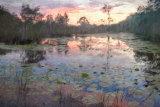 Urunga Wetland Dawn