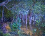 Magic Mangrove
