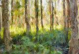 Martell's Road Swamp