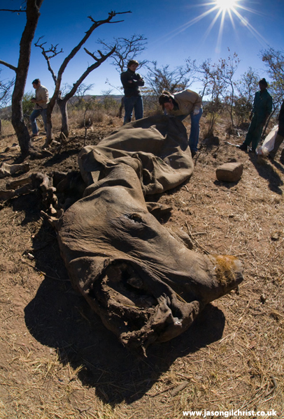 Rhino post-mortem