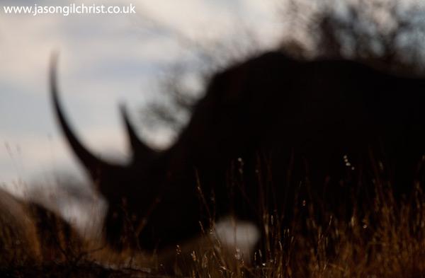 White rhino silhouette
