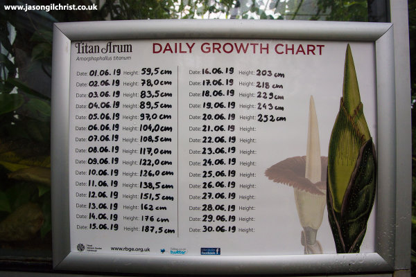 Daily growth chart - Titan arum (Amorphophallus titanum)