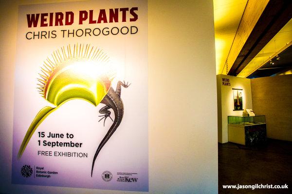 Weird Plants - with Titan Arum lurking in the background...