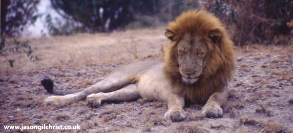 African Forest Porn Videos