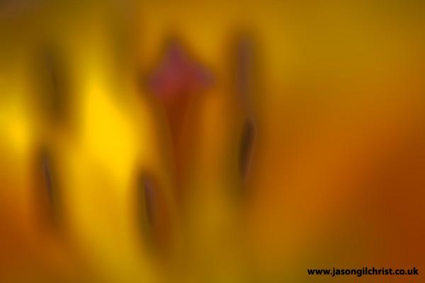 Alien world: inside the Allium