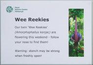 Beware the reek (smell) - Amorphophallus konjac (Wee Reekie) at Royal Botanic Garden Edinburgh