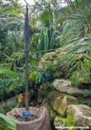 Wee Reekie pre-flowering at the Royal Botanic Garden Edinburgh