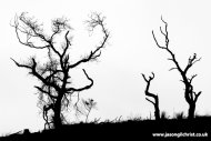 Dancing skeleton trees of North Sannox