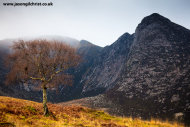 Goatfell with birch tree, Glen Sannox