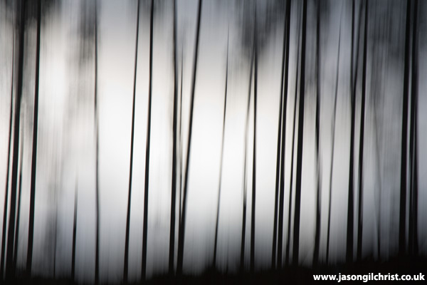 Silhouette of Pines On the Edge of the Black Wood of Rannoch