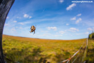 A spider's eye view of the Flow Country, RSPB Forsinard Flows Nature Reserve