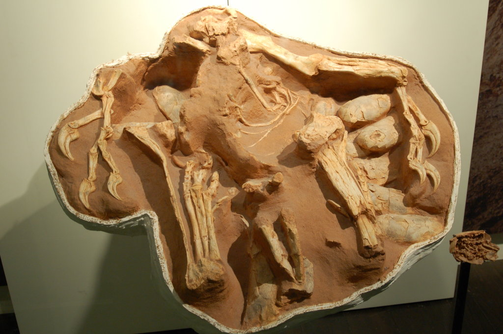Big Mama, Citipati osmolskae, oviraptor female brooding clutch of eggs