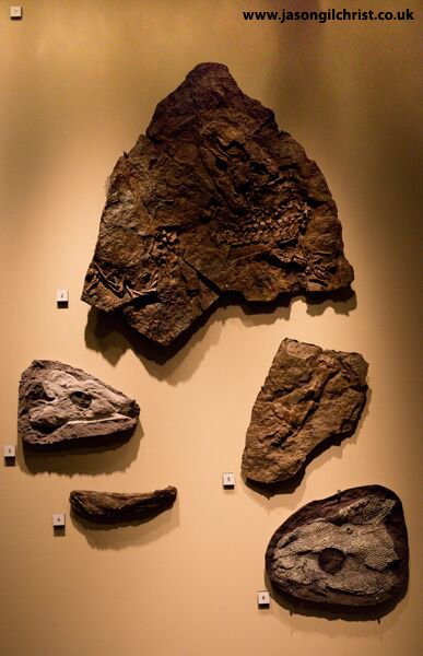 Fossils from Fossil Hunters