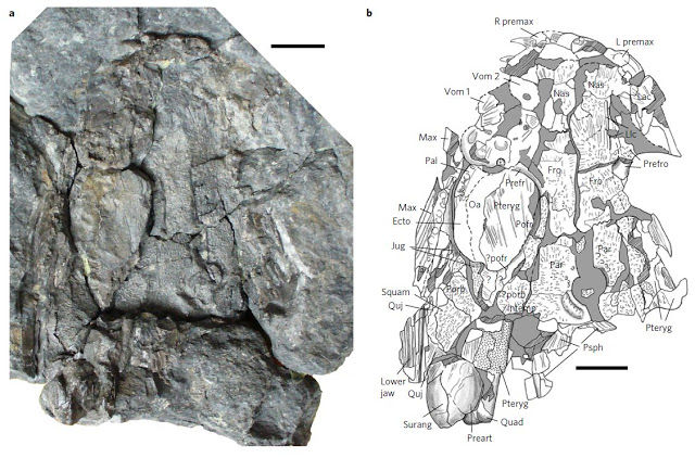 Koilops herma - an early tetrapod from Willie's Hole
