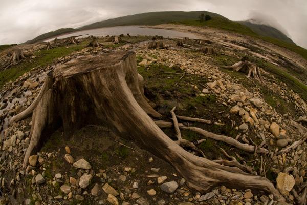 Skeletons of trees