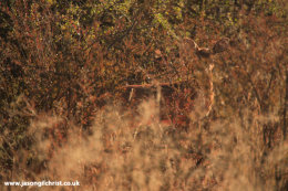 Invisibok: the Steenbok