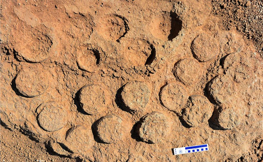 A nest of fossilised dinosaur eggs, Javkhlant, Gobi Desert, Mongolia