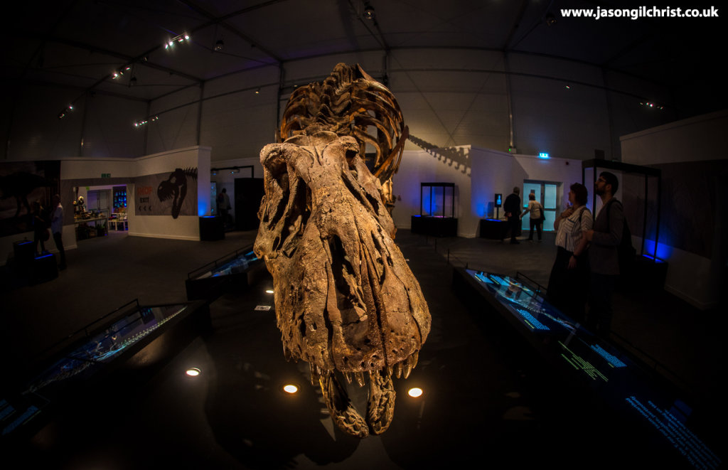 Trix the Tyrannosaurus rex - wide-angle perspective at the Kelvin Hall Glasgow