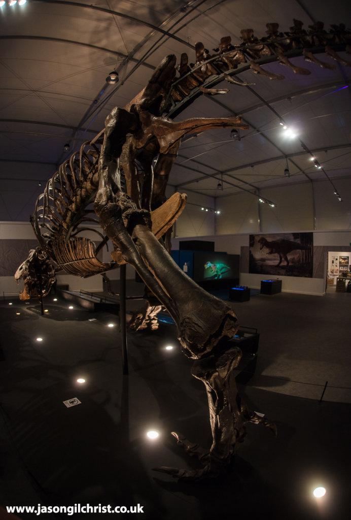 Trix - Tyrannosaurus rex bounding away